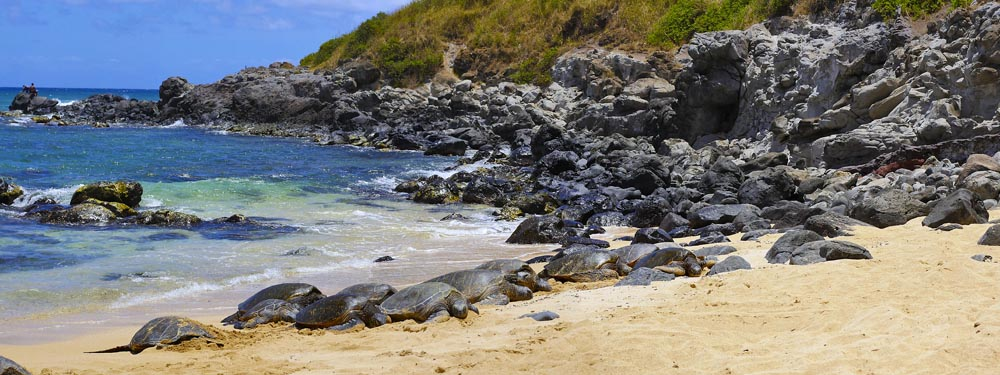 Turtles - Hookipa Beach - North Shore