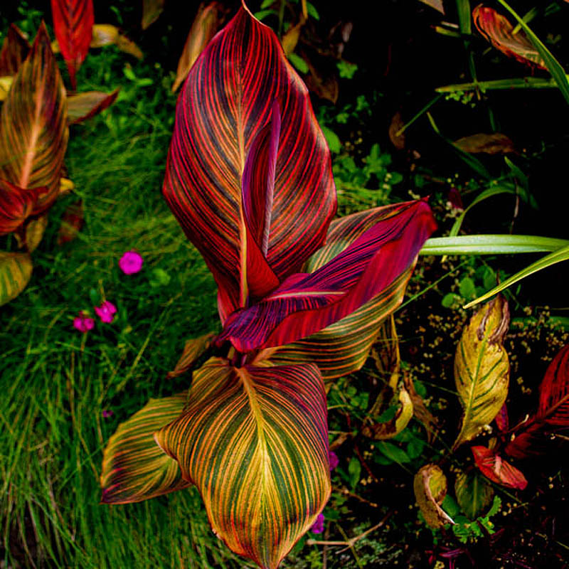 Plants for Tropical Landscapes A Gardeners Guide Fred D
